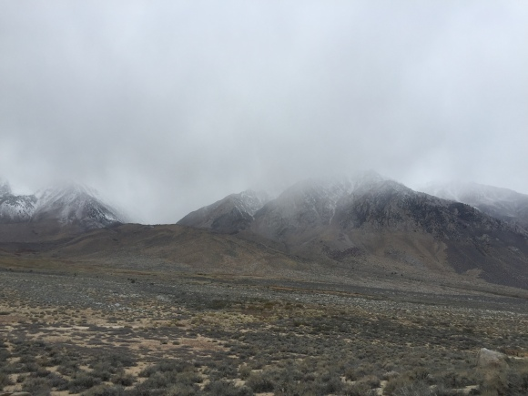 foggy buttermilks